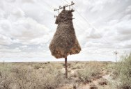 25 Stunning Photographs of Birds' Nests