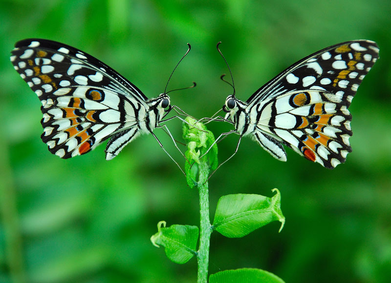 Picture of the Day: The Butterfly Effect     «TwistedSifter