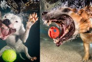 Underwater Photos of Babies Discovering a Brand NewWorld
