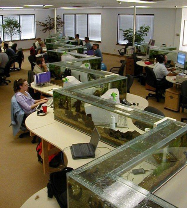 TwistedSifter Zig Zag Office Aquarium Also A Desk Divider 1