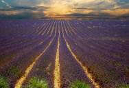 15 Stunning Photos of Lavender Fields Around theWorld
