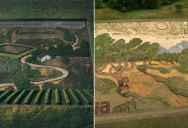 Giant Living Artworks 'Grown' on the Rice Fields of Japan