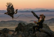 A Bald Eagle and Canada Goose Squared Off and Someone Caught It All (10Photos)