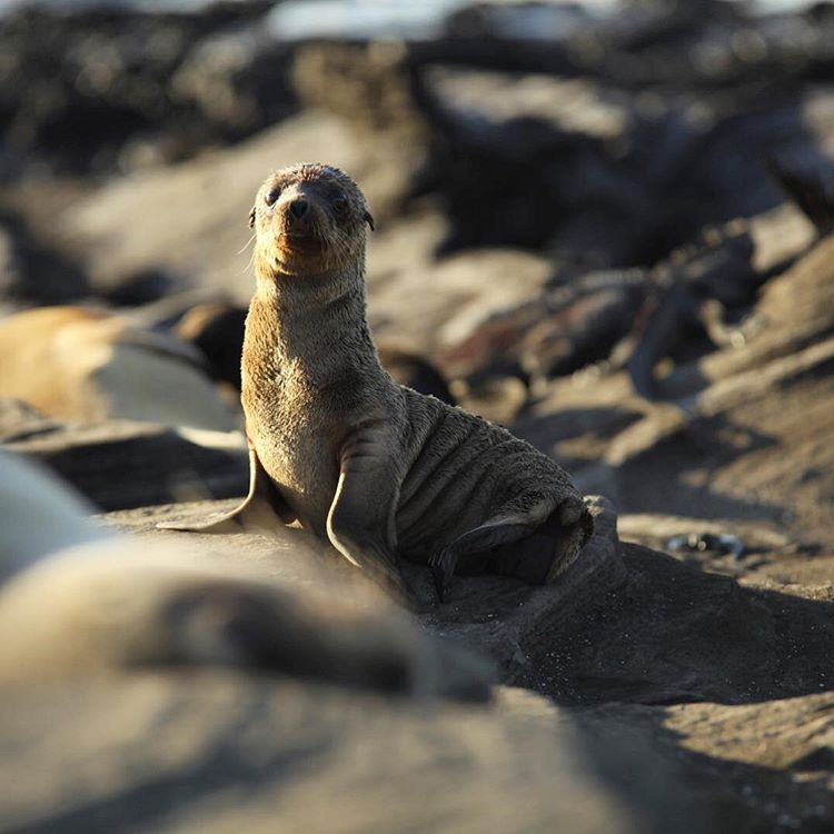 Awwwww! One of the many adorable baby sea lions wehellip