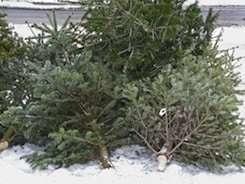xmastree (1)