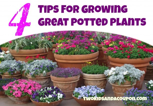 tips  growing great potted plants  kids   coupon