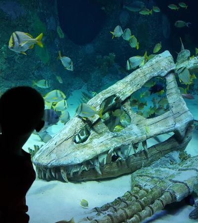 Sea Life Kansas City Aquarium strives to send a clear message to its visitors: breed, rescue, protect. It achieves this through a passionate system of conservation that draws on decades of collective experience from its marine rburbeltoddrick.ga: $