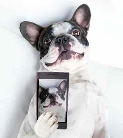 Would you give up your dog before your cell phone? Some people would! Here are the surprising stats!