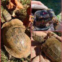 An Ode to Tillie the Turtle #ReptileCare
