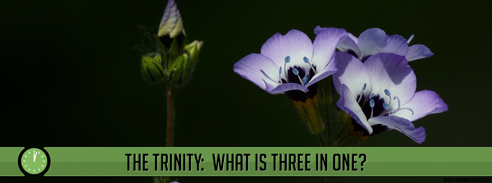 The Trinity:  What is Three in One?