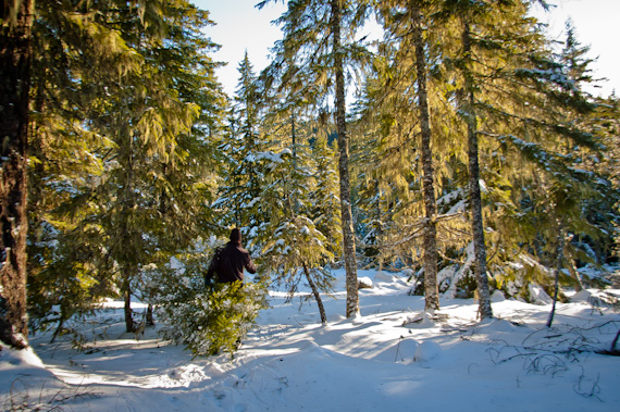 Wild Christmas Tree Grows in Oregon: New Traditions for Our Little ...