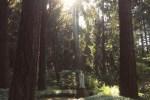 wpid720770-Visiting-Upper-Gardens-The-Grotto-Portland-Oregon-1.jpg