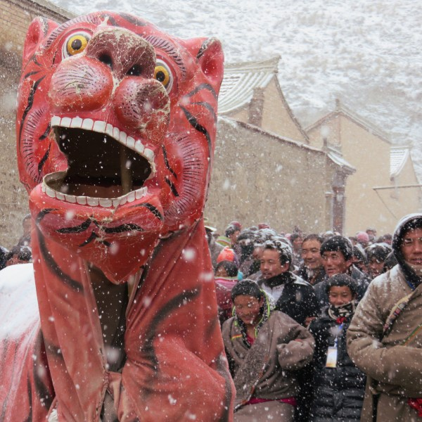 tiger in the crowd at hoincang