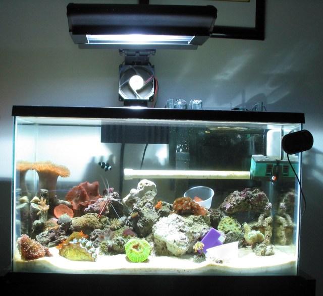 10g Reef Saltwater Aquarium