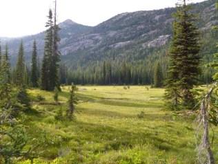 subalpine forest near Washington Pass in the North Cascades
