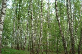 Брезова гора