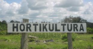 Pemahaman Budidaya Hortikultura Secara Organik