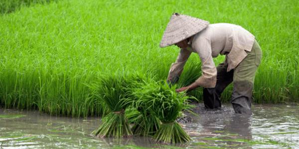 Pertanian Organik Solusi Pertanian Modern2