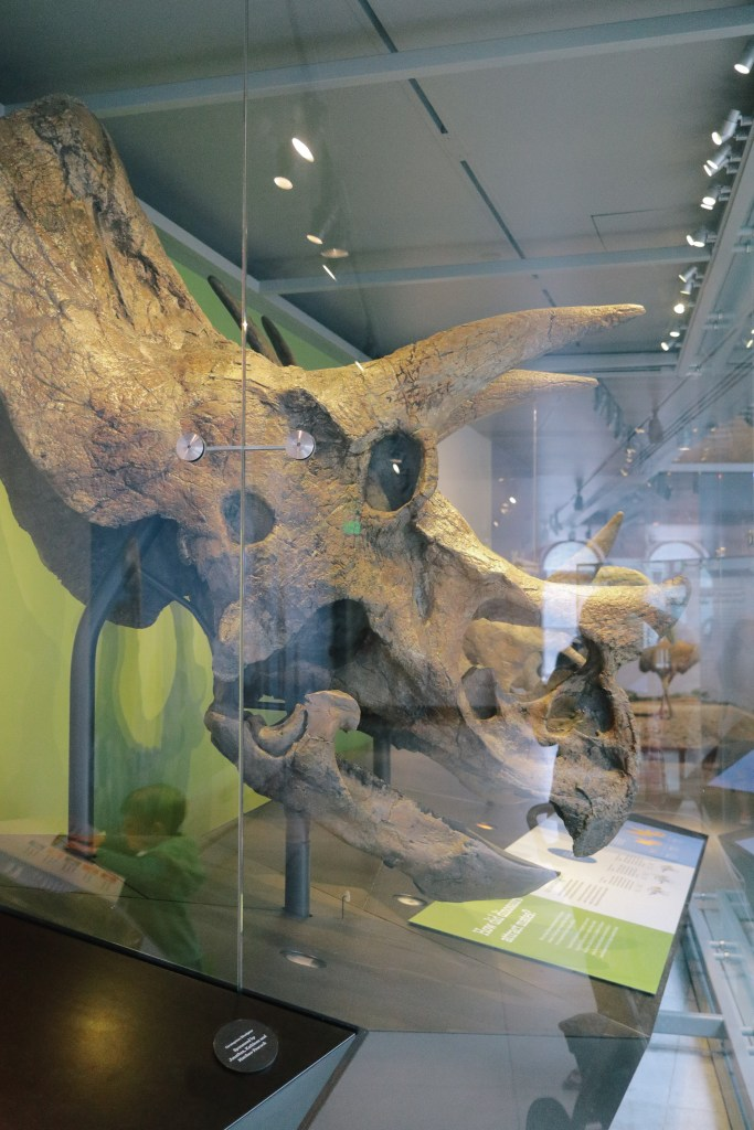 Natural-History-Museum-2824