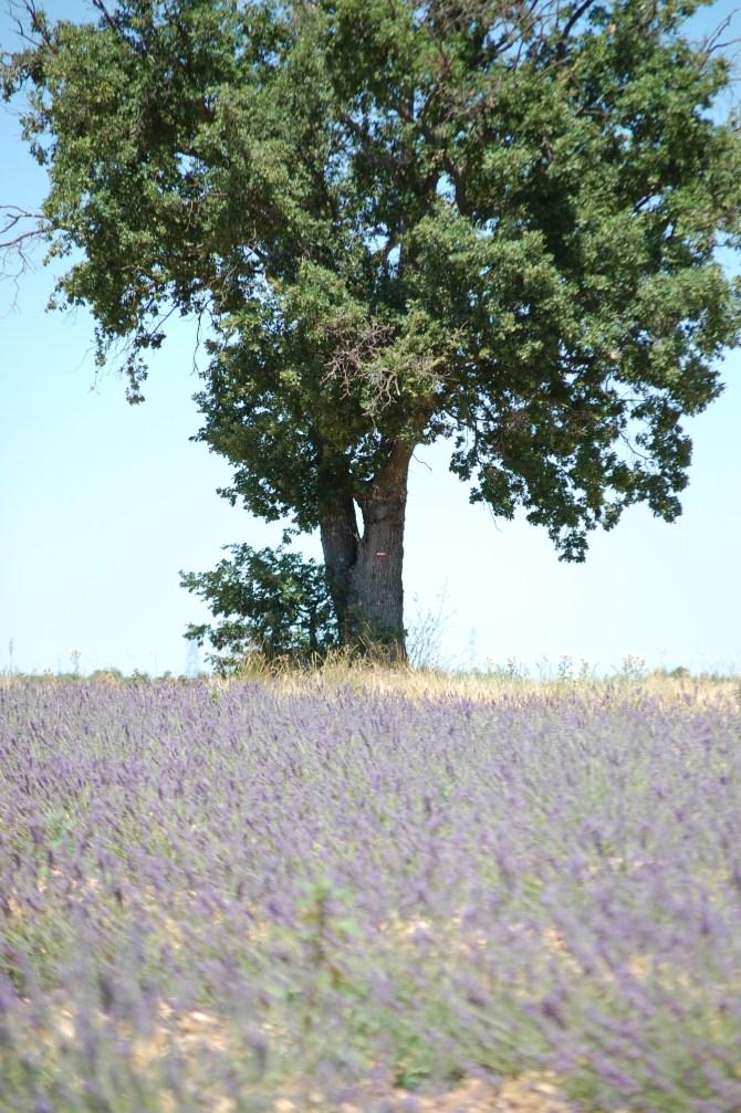 Provence 2016 238