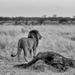 Premium East Africa Safari
