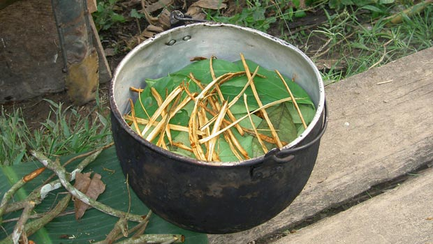 Alternative Cancer Treatment Ayahuasca