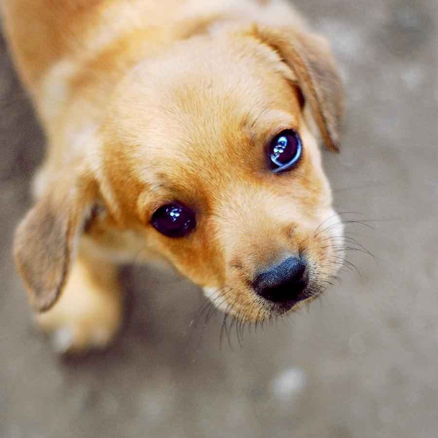 Horrible Sad Puppy S Gif Sad Puppy S Gif Sorry Puppy Sad Puppy S Gif Sad Puppy S Gif Sorry Puppy Love Sad Puppy Waiting Gif Sad Puppy Dog Gif bark post Sad Puppy Gif