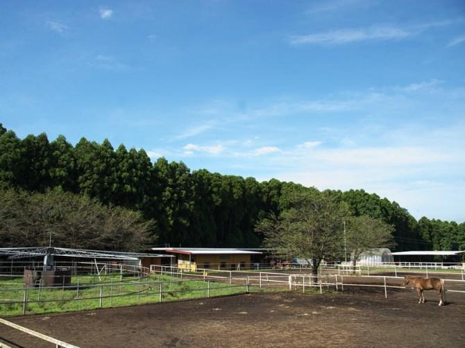 ストームファーム 牧場風景
