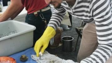 smorgasburg-small-oysters-400x600