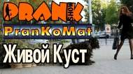 1414451102_Prank-Zhivoiy-kust-PranKoMat-GoshaProductionPrank_1