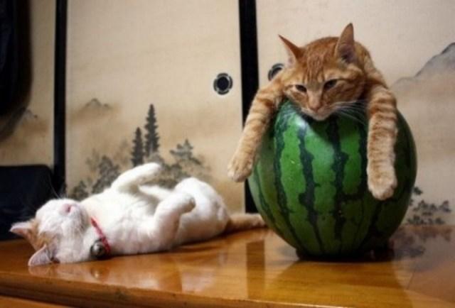 25 котов, познавших науку сна