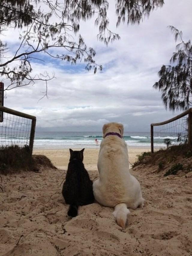 Подборка любящих собак и кошек
