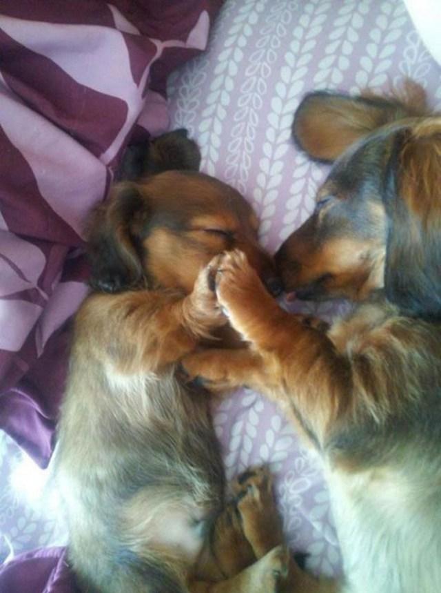 Мамы - собаки и их детки - щеночки