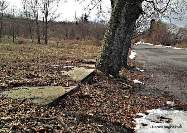 Sidewalks have buckled under trees along what was once a residential street in Centralia, Pennsylvania.