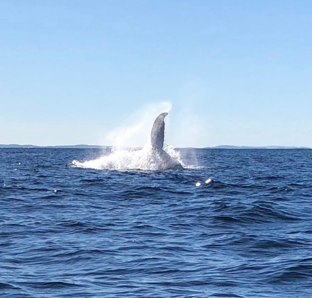 whale tail 2 july 2018