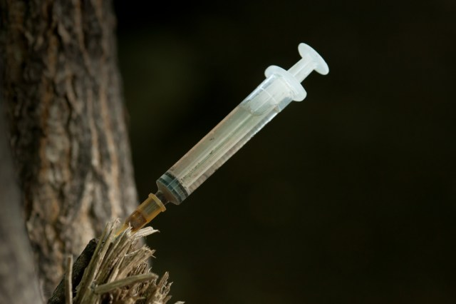 Heroin addicts put their syringes in trees to keep anyone from stepping on them.