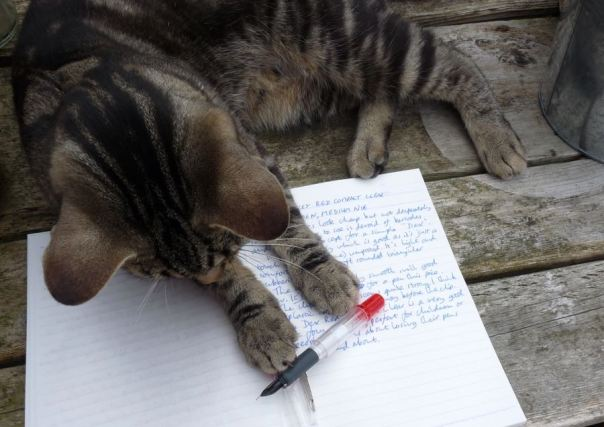 pen and cat