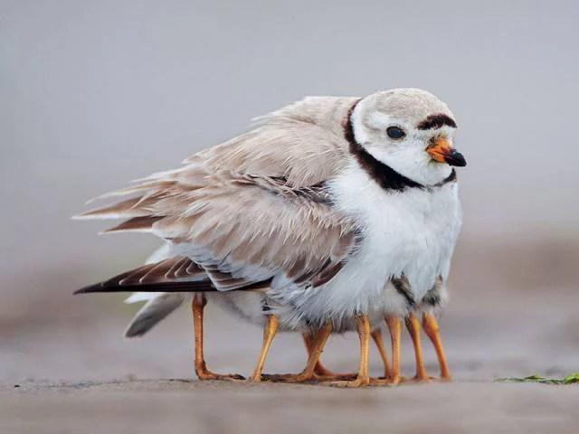 uccellino e suoi piccoli