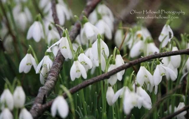 fiori di oliver howell
