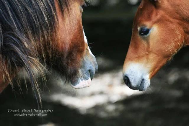 cavalli si guardano oliver howell