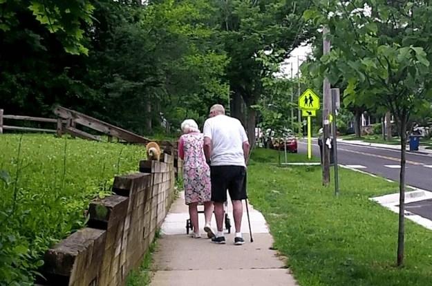coppia anziana a spasso col gatto