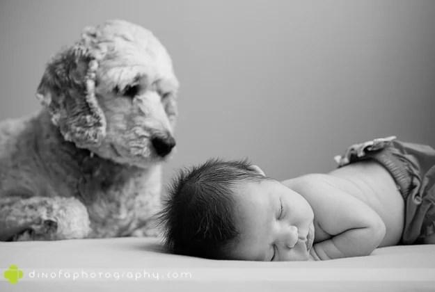 padroncino e cane