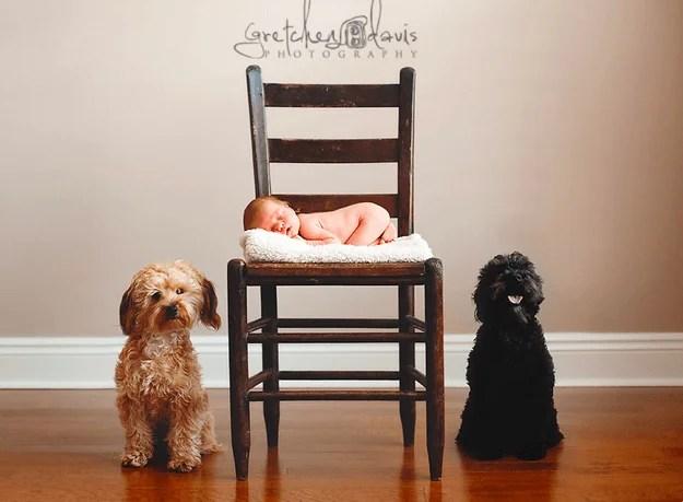 due cani e bebè