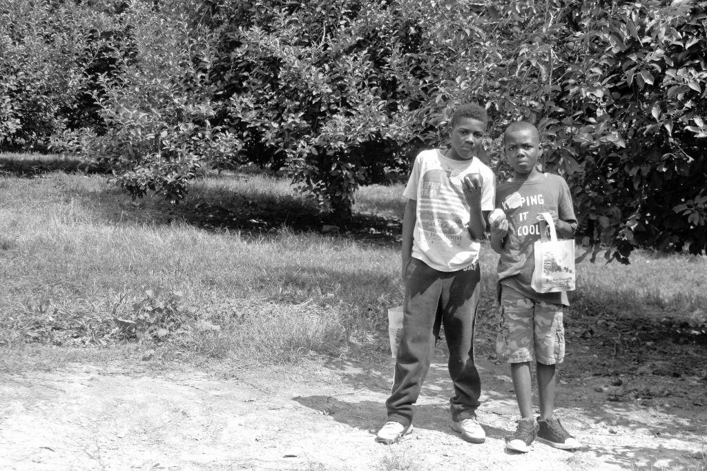B.J. Reece Orchards
