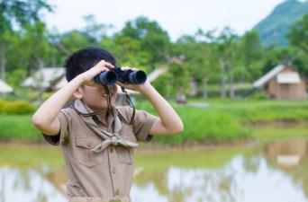 observation nature