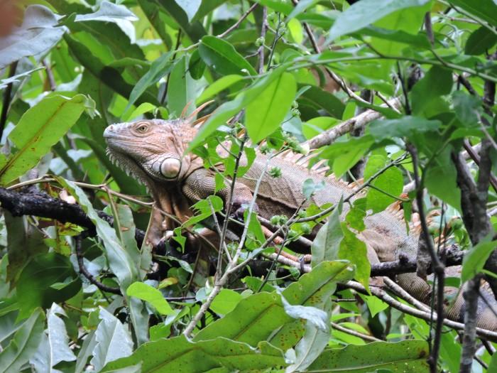 Faune du parc national de Cahuita