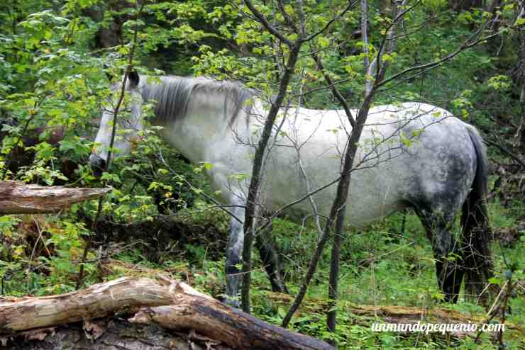 Caballo salvaje en el Parque Nacional Tierra del Fuego