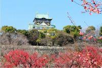 大阪城公園 梅林2015│駐車場・アクセス情報│現在の開花状況は?