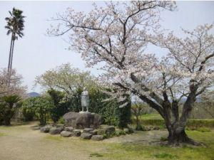 長崎桜お花見スポット2015オススメ