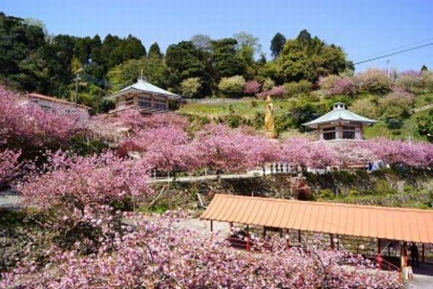 大分の桜見頃はいつ?花見スポット2015名所9選+1はここ!